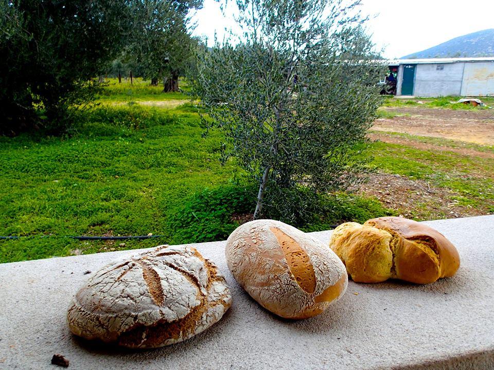 bread-lucas