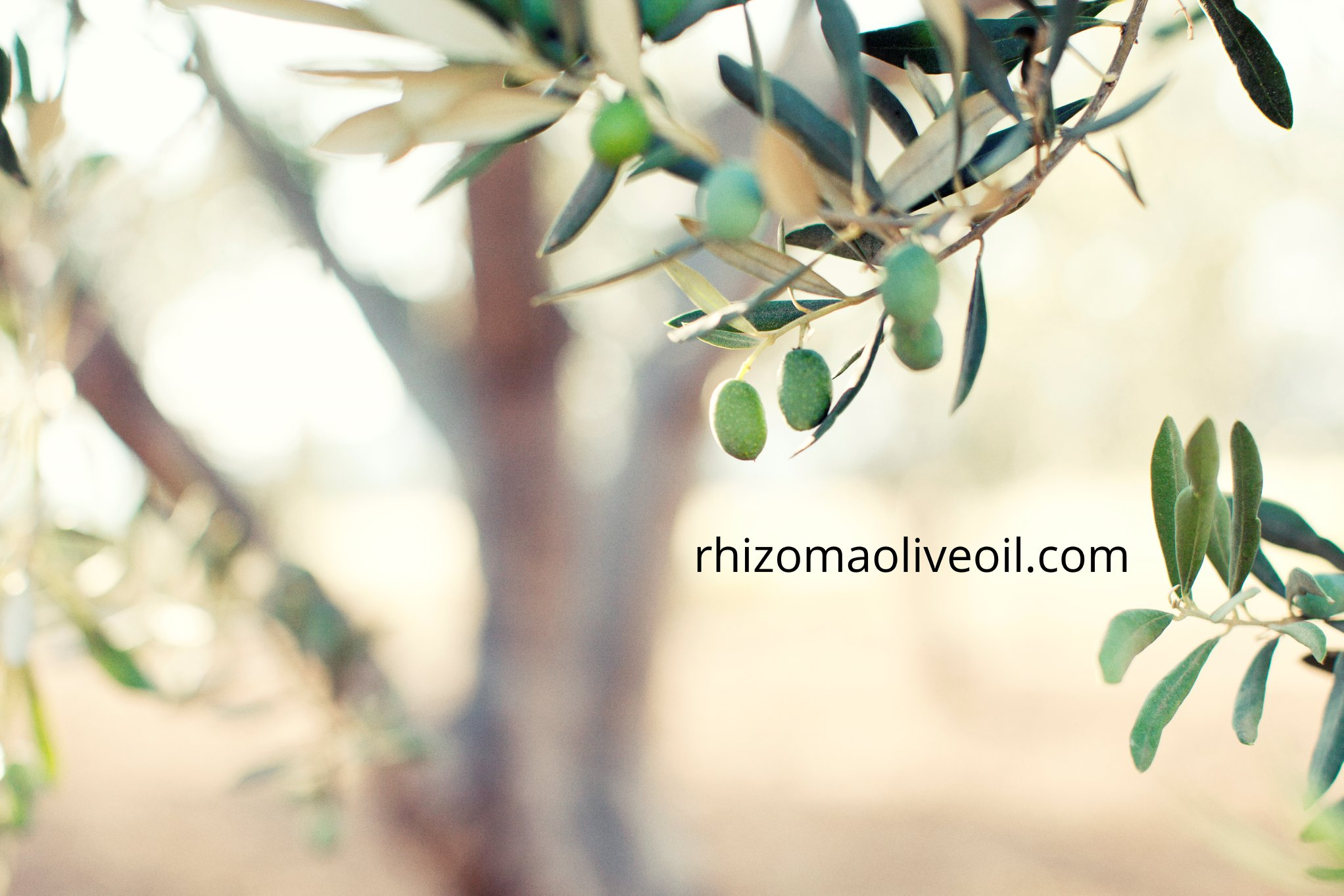 olive farms